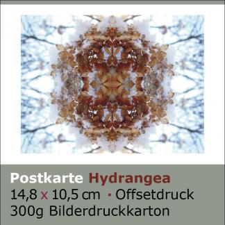 Postkarte Hydrangea