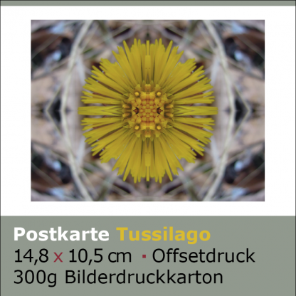 Postkarten Tussilago